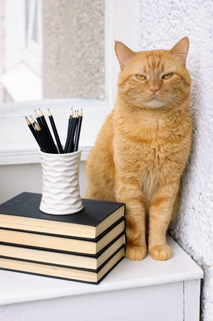 A stack of books, pencils and a big red cat on a white table Stock Photo