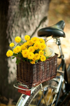 yellow chrysanthemums in a wicker basket on the trunk of a bicycle