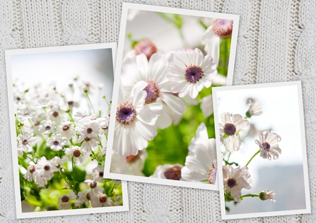 collage of three photos of spring flowers on knitted texture photo