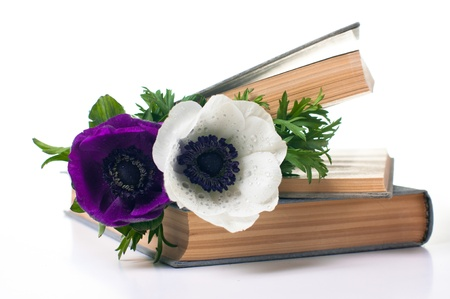 anemone flower: Two anemone flowers in an old book on white background Stock Photo