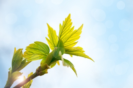 Spring background with green leaves in sunlight photo