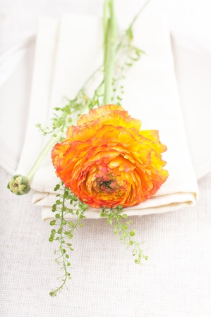 Orange ranunkulus flower on a linen napkin closeup photo