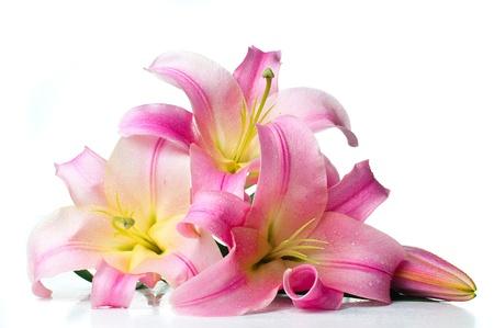 lirio blanco: ramo de lirios color rosa con grandes gotas de agua aisladas sobre fondo blanco