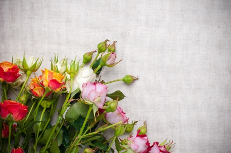 rose coloured: Bouquet of multicolored roses on a rough linen fabric close-up Stock Photo