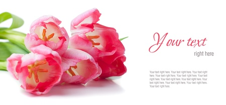 Bouquet of pink tulips on a white background, isolated, ready template