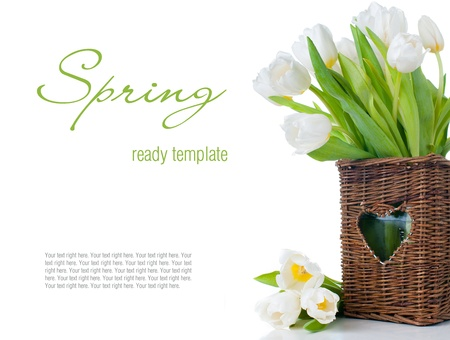 Spring bouquet of fresh white tulips in a wicker basket, isolated, close-up, ready template photo