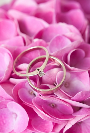 A pair of wedding rings on flowers and petals of pink hydrangea close-up, macro photo