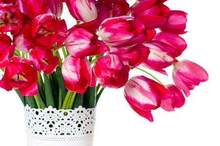 tulips in vase: Bouquet of bright pink tulips in a white vase on a white background, isolated