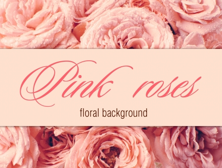 Flower background with pink roses, ready design template photo
