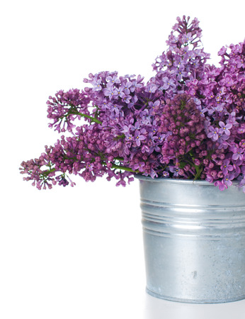 Fresh spring bouquet purple lilac in zinc plant pot isolated on white background photo