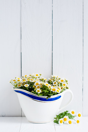 Chamomile flowers in vintage ceramic gravy boat on white wooden background, home rustic decor Stock Photo