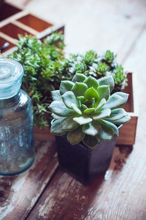 家の植物、緑多肉植物、古い木製の箱、木の板、庭いじりをし、素朴なスタイルを飾る家の青いヴィンテージガラスびん