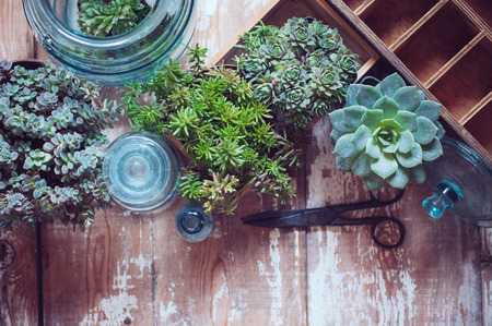 glass bottles: House plants, green succulents, old wooden box and blue vintage glass bottles on a wooden board, home gardening and decorating rustic style.
