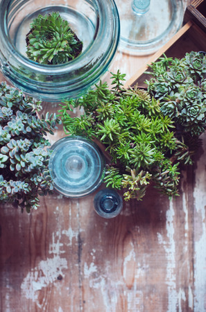 House plants, green succulents, old wooden box and blue vintage glass bottles on a wooden board, home gardening and decorating rustic style. photo