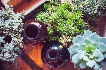 House plants, green succulents, old wooden box and brown vintage glass bottles on a wooden board, home gardening and decor rustic style. photo