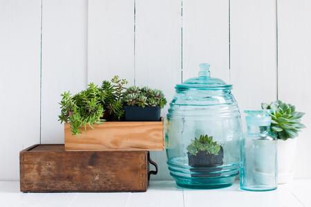 home accessories: Vintage home decor: houseplants, green succulents, old wooden boxes and vintage blue glass bottles on white wooden board, cozy home interior.