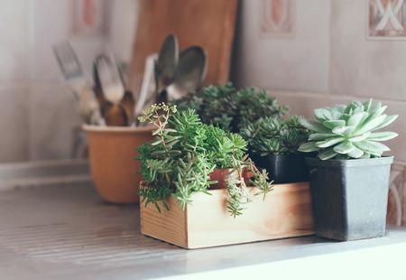 Kamerplanten, groene vetplanten in een houten kist op een metalen aanrecht, woondecoratie retro stijl. Stockfoto - 29796553