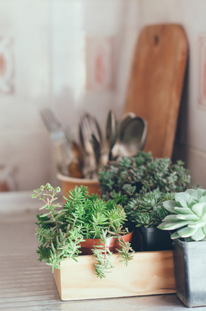 House plants, green succulents in a wooden box on a metal countertop, home decor retro style. photo