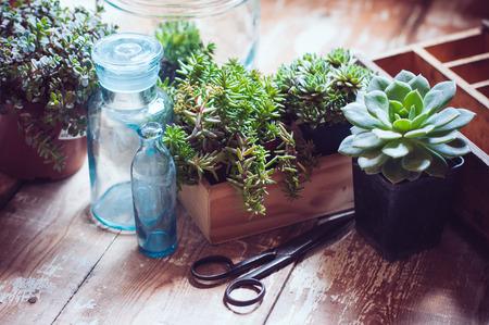 Kamerplanten, groene vetplanten, oude houten doos en blauwe vintage glazen flessen op een houten plank, tuinieren en decoreren rustieke stijl.