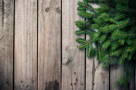Fresh green spruce branches on an old wooden board photo
