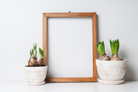 Hyacinth and narcissus sprouts in ceramic pots and empty wooden frame on a white wall