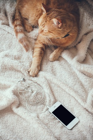 paw smart: Big red cat lies on a soft beige blanket playing with a smartphone Stock Photo