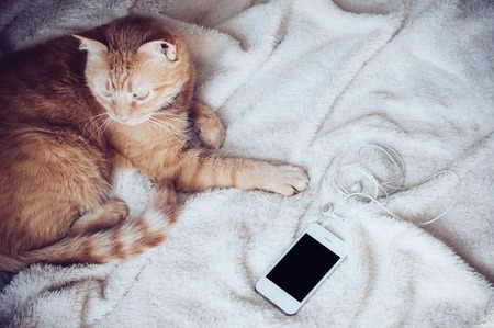 Big red cat lies on a soft beige blanket playing with a smartphone Stock Photo