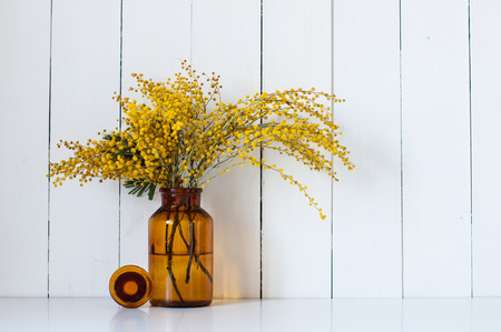 mimosa: Home decor, mimosa yellow spring flowers in a vintage bottle on the white wall background