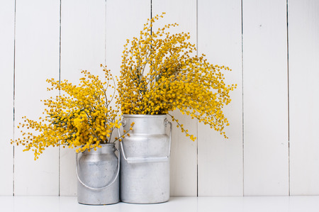 ビンテージ アルミのミモザの黄色い春の花は、白い納屋の壁の背景に缶します。