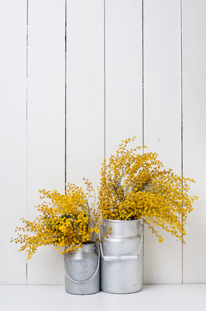 aluminum cans: mimosa yellow spring flowers in vintage aluminum cans on white barn wall background