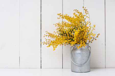 mimosa yellow spring flowers in vintage aluminum cans on white barn wall background