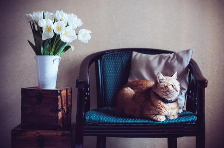 Home interior, gatto seduto in una poltrona, un muro e un mazzo di tulipani bianchi Archivio Fotografico - 37366491