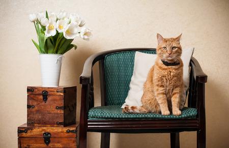Interior de una casa, gato que se sienta en un sillón, una pared y un ramo de tulipanes blancos Foto de archivo