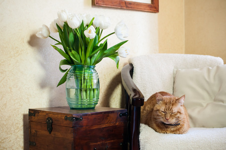 Home interior, cat sleeping in an armchair, a wall and a bouquet of white tulips photo