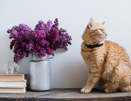lilac: Home interior decor, bouquet of lilacs in a vase, books and ginger cat on rustic wooden table, on a white wall background