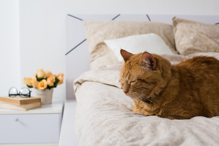Bright white bedroom interior, cat sitting on a bed with beige linen, flowers on a bedside table, closeup