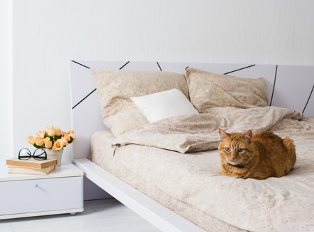 flowers cat: Bright white bedroom interior, cat sitting on a bed with beige linen, flowers on a bedside table, closeup