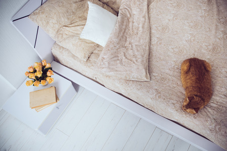 house cat: Bright white bedroom interior, cat sitting on a bed with beige linen, flowers on a bedside table, closeup
