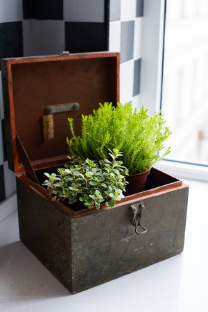 Home plants on a windowsill in the modern kitchen interior close-up. Home gardening. photo