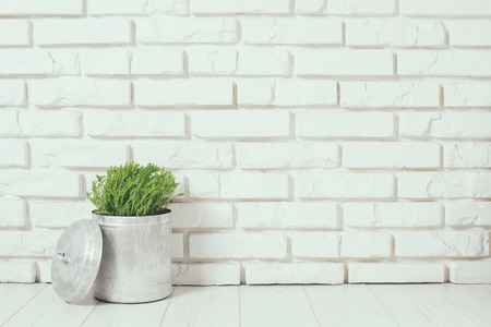 Green home plant near the white brick wall on the floor, rustic home interior decor with copy space Stock fotó