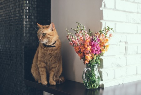 Domestic red cat with a bouquet of flowers in a modern home interior photo