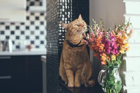 モダンなインテリアの花の臭いがする国内の赤猫