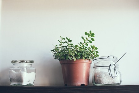 vintage kitchen: Domestic plant in a pot and jars on the kitchen shelf on the wall, close-up Stock Photo