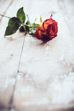 Rosso di rosa fresca su una tavola di legno vecchio, sfondo d'epoca