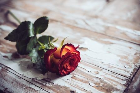 Świeże czerwona róża na starym drewnianym pokładzie, rocznika tle