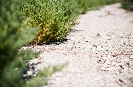 peaceful background: Green grass and sandy footpath closeup, gardening background Stock Photo