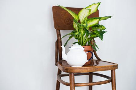 plante: Vintage pot de thé d'émail et de plantes à la maison verte sur une vieille chaise en bois, décor confortable pour un balcon d'été intérieur. Banque d'images