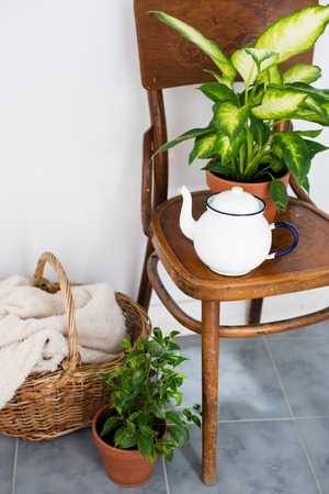 indoor plants: Vintage enamel tea pot and green home plants on an old wooden chair, cozy decor for summer balcony interior. Stock Photo