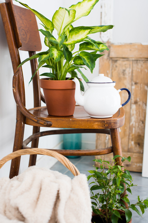 interior decor: Vintage enamel tea pot and green home plants on an old wooden chair, cozy decor for summer balcony interior. Stock Photo