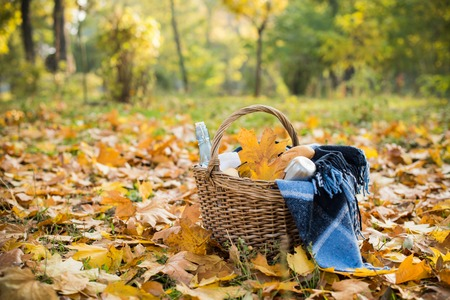 autumn food: Basket with a blanket, coffee and food in the yellow autumn leaves. Autumn picnic in the park, a warm autumn day.